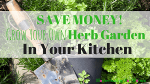 Herb Garden In Your Kitchen