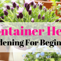 Container Herb Gardening For Beginners tips