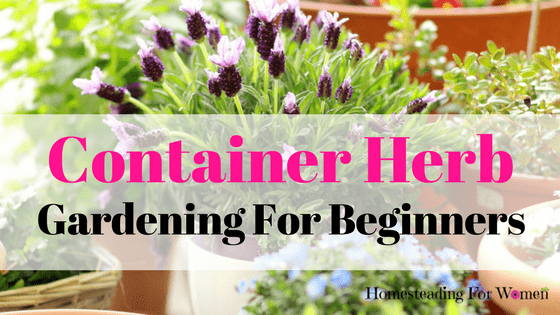 Inspirational Indoor Herb Gardens For Beginners Home