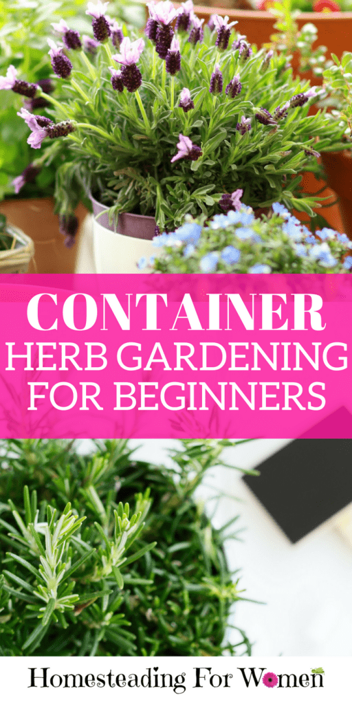 Cool Container herb gardening for beginners
