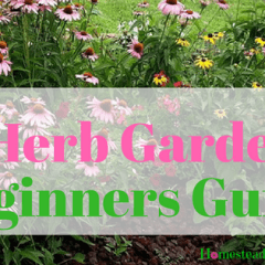 Easy Herb Gardening Beginners Guide (1)