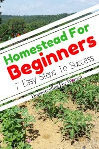 Homestead For Beginners- 7 Easy Tips To Success