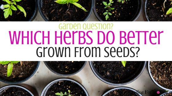 Which Herbs Do Better Grown From Seeds_