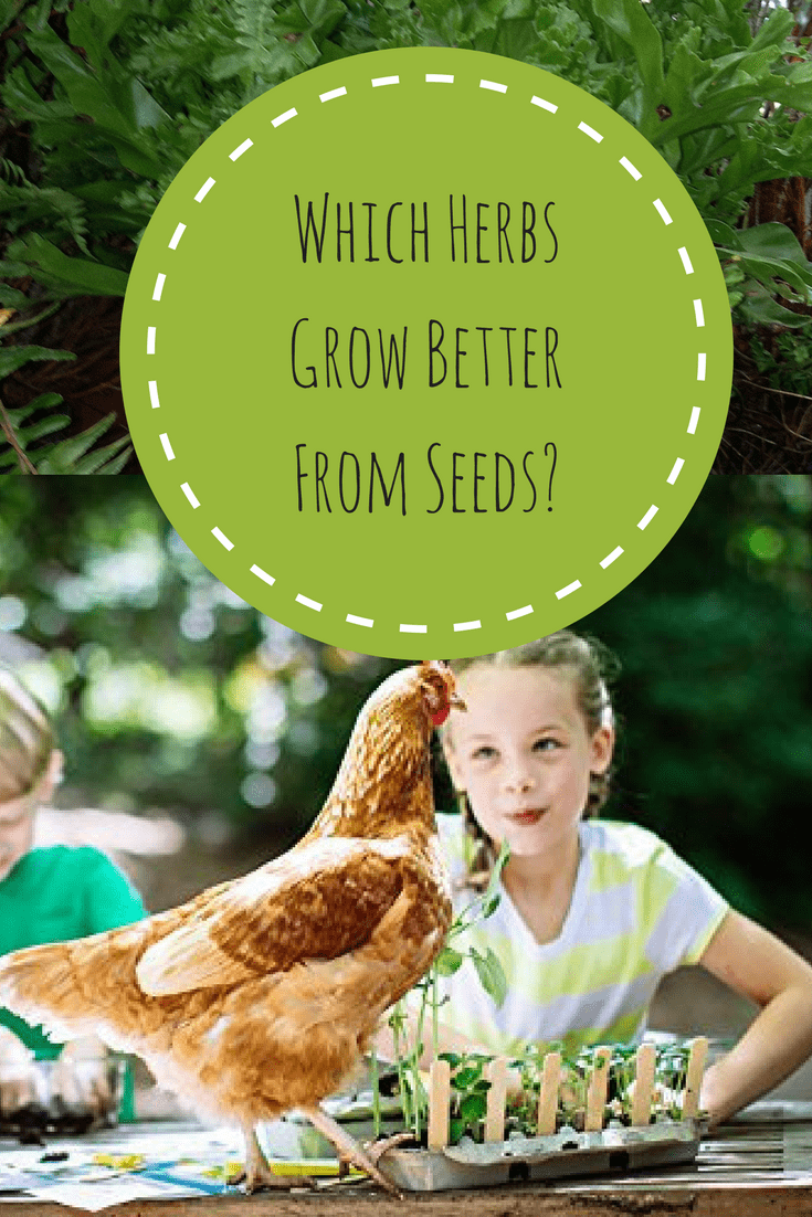 Which herbs grow better with seeds?