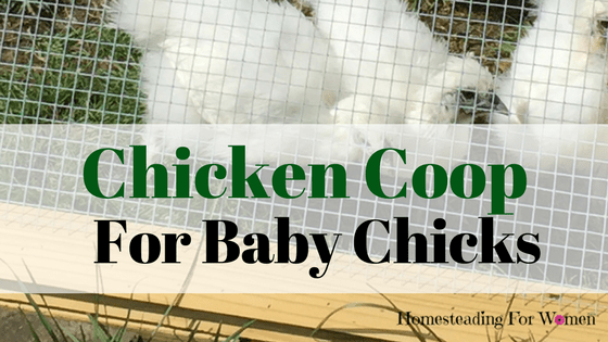 Chicken Coop for baby chicks (2)