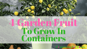 4 Garden Fruit To Grow in Containers at home