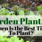 Garden Planting Vegetables For Beginners -The Best Time To Plant A Garden