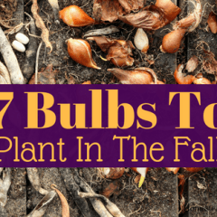 7 Bulbs to plant in the fall for Spring