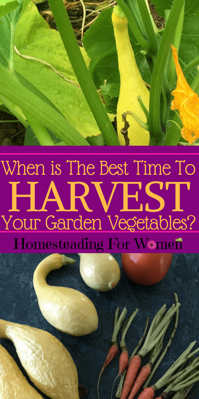 When is the best time to harvest your garden vegetables-
