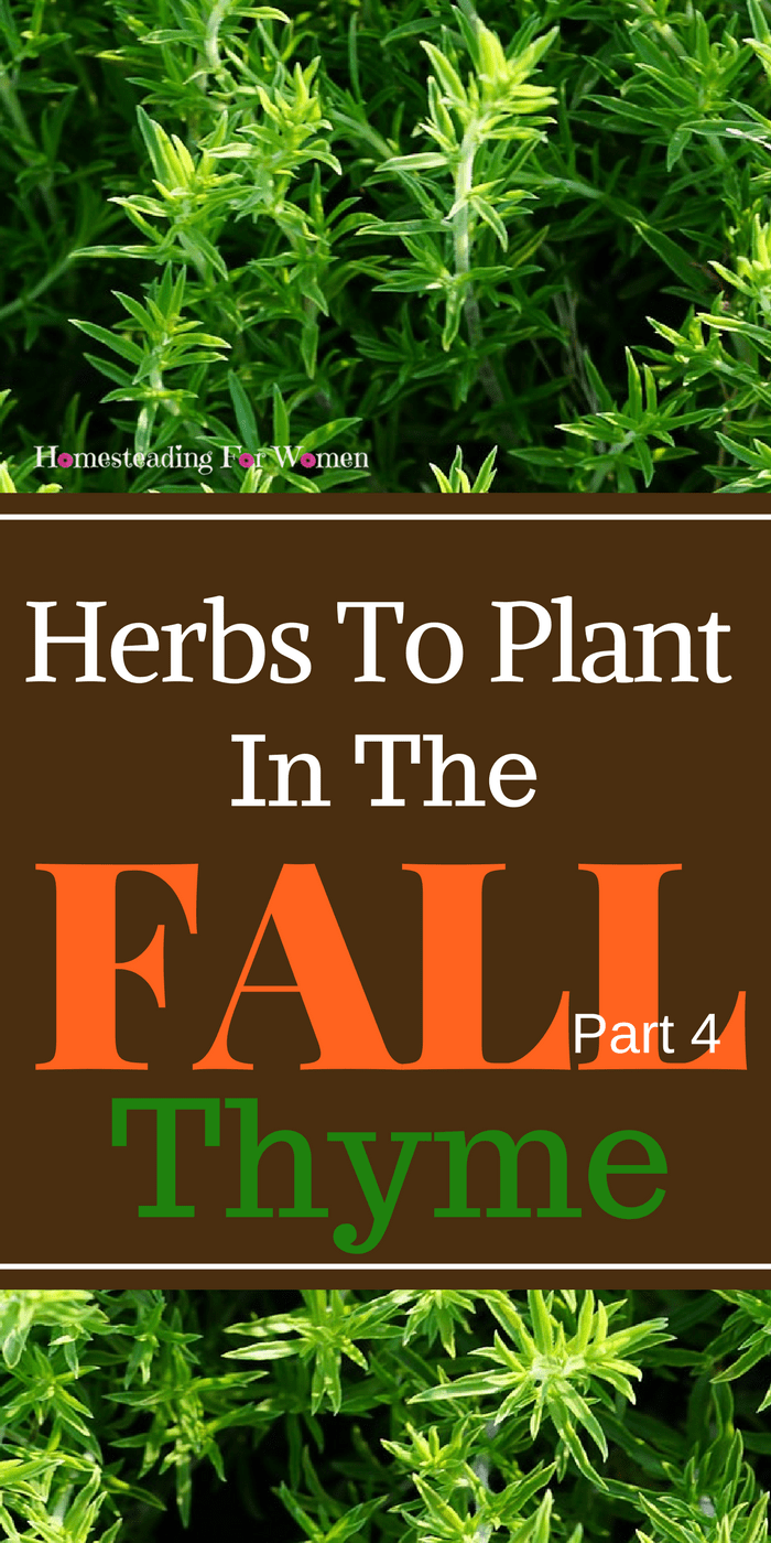 Herbs To Plant In The Fall Thyme
