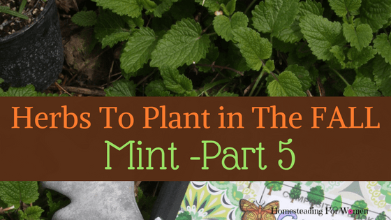 Herbs To Plant In The Fall -Part 5 Mint