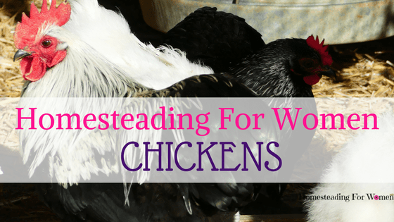 Homesteading for women chickens