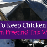 How to keep Chicken Water from freezing