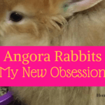 Angora Rabbits My New Obsession!