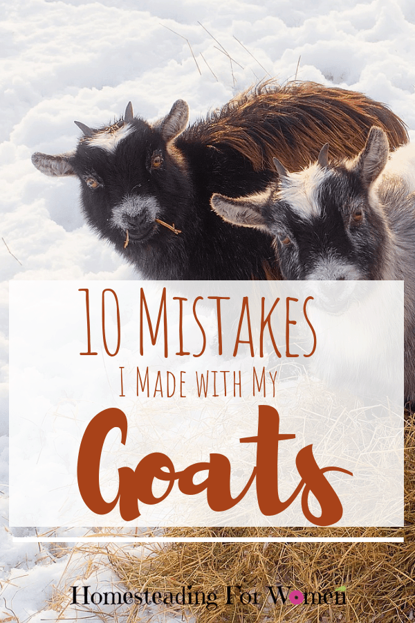 10 mistakes I made with my goats-min