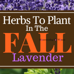 Herbs To Plant In The Fall Lavender-min