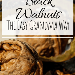 How To Harvest Black Walnuts The Easy Grandma Way-min