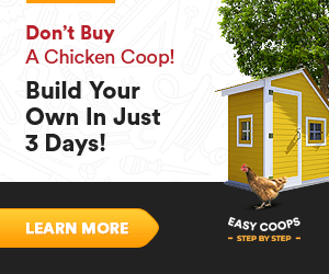 basic chicken coop building plans