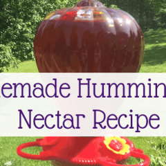 Easy Homemade Hummingbird Nectar Recipe-min