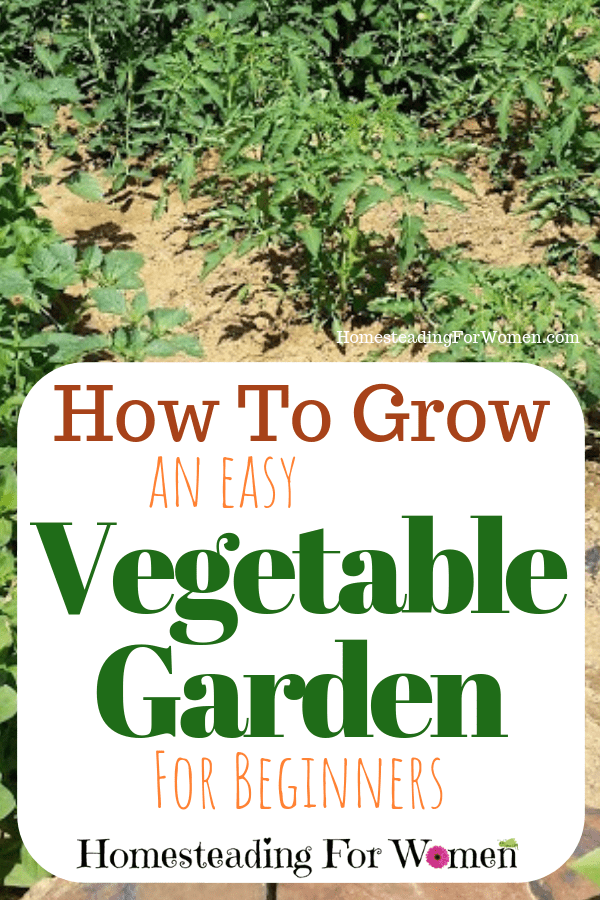 How to grow a vegetable garden for beginners-min