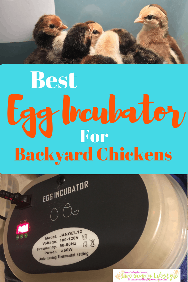 Best egg incubator backyard chickens