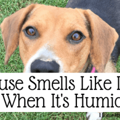 House Smells Like Dog When It's Humid-min