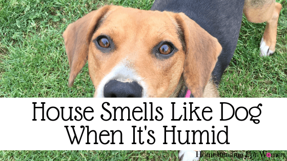 House Smells Like Dog When It's Humid -Here's My Solution