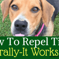 How to repel ticks naturally on your homestead that really works-min