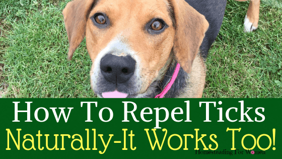 How To Repel Ticks Naturally On Your Homestead -That REALLY Works!