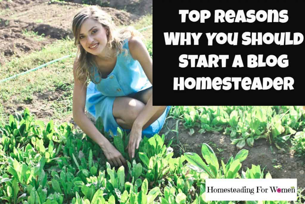 Top reasons why you should start a blog homesteader