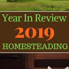 HOMESTEADING 2019 Year in review