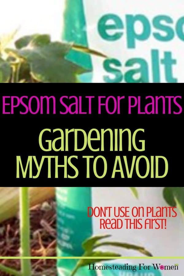 Epsom Salt For Plants -Gardening Myths To Avoid
