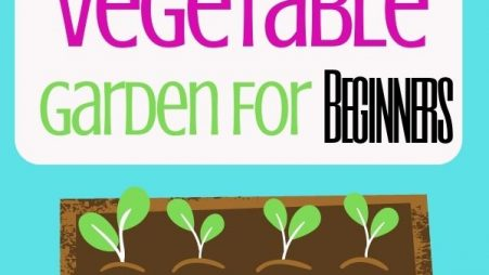How To Grow An Easy Vegetable Garden For Beginners