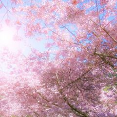 Spring Self Care Ideas To Reduce Stress Featured