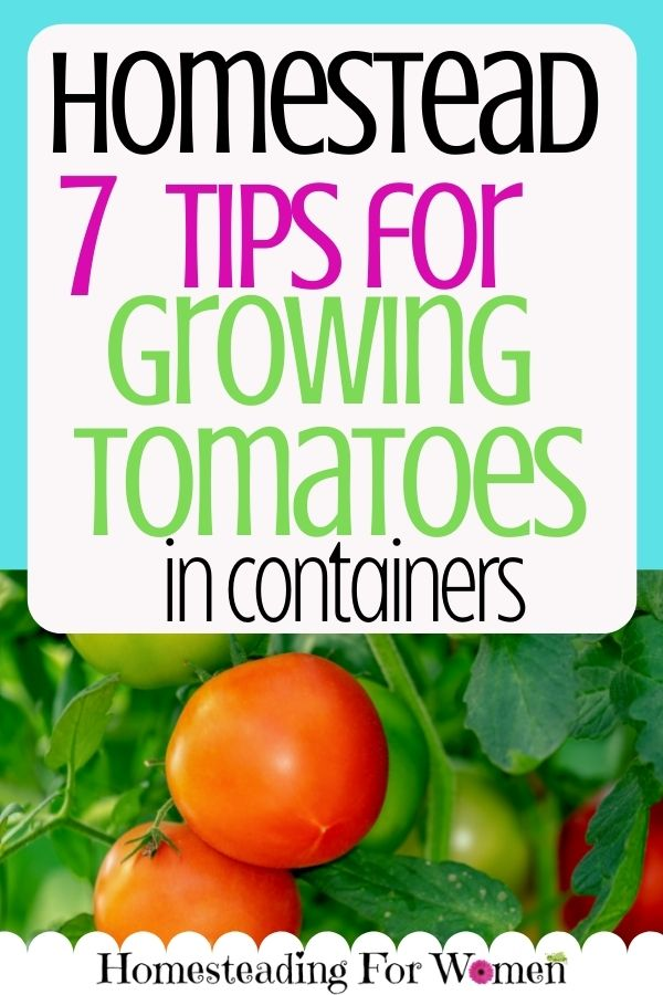 7 Tips for Growing Tomatoes In Containers Pin